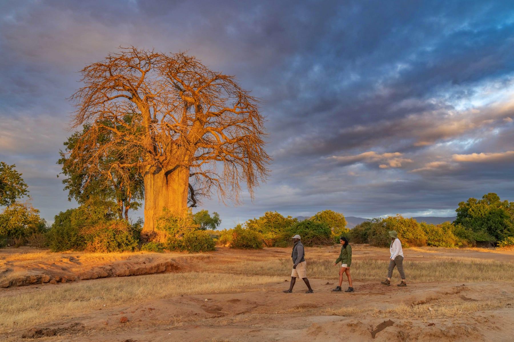 chongwe-walking-safaris
